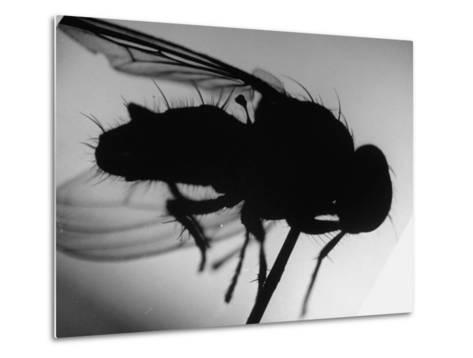 Fly--Metal Print