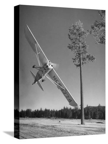 Pilot Sammy Mason Flying around a Tree During a Performance of His California Air Circus-Loomis Dean-Stretched Canvas Print