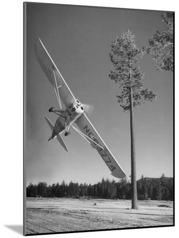 Pilot Sammy Mason Flying around a Tree During a Performance of His California Air Circus-Loomis Dean-Mounted Photographic Print