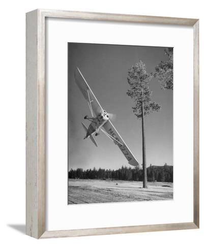 Pilot Sammy Mason Flying around a Tree During a Performance of His California Air Circus-Loomis Dean-Framed Art Print