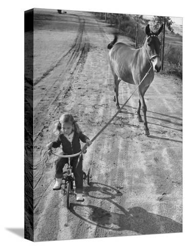 Little Girl Riding Her Tricycle, Leading Francis the Mule-Allan Grant-Stretched Canvas Print