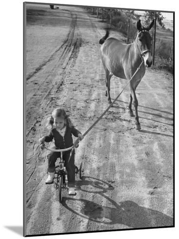 Little Girl Riding Her Tricycle, Leading Francis the Mule-Allan Grant-Mounted Photographic Print
