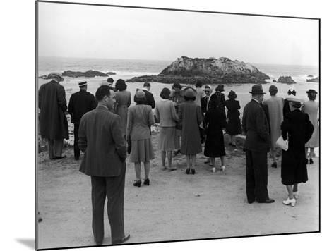 Tourists Visiting Coastal Areas Where Seals Congregate on Monterey Peninsula-Peter Stackpole-Mounted Photographic Print