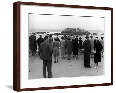 Tourists Visiting Coastal Areas Where Seals Congregate on Monterey Peninsula-Peter Stackpole-Framed Art Print