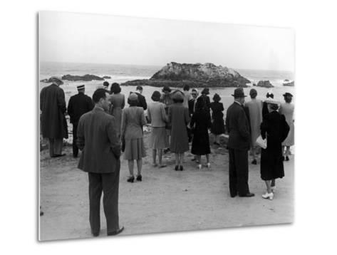 Tourists Visiting Coastal Areas Where Seals Congregate on Monterey Peninsula-Peter Stackpole-Metal Print