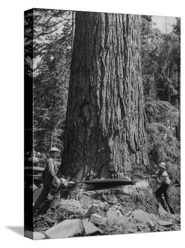 Excellent Set Showing Lumberjacks Working in the Forests, Sawing and Chopping Trees-J^ R^ Eyerman-Stretched Canvas Print