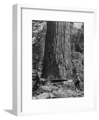 Excellent Set Showing Lumberjacks Working in the Forests, Sawing and Chopping Trees-J^ R^ Eyerman-Framed Art Print
