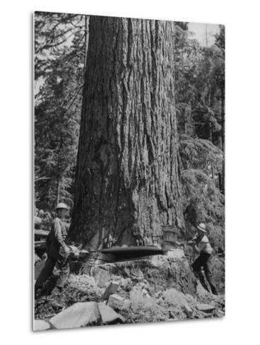 Excellent Set Showing Lumberjacks Working in the Forests, Sawing and Chopping Trees-J^ R^ Eyerman-Metal Print
