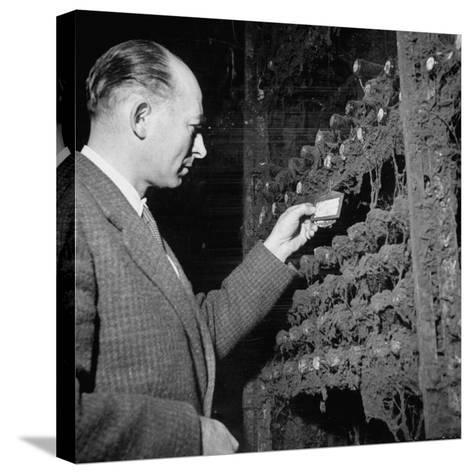 Director Yoes Kressmann, Looking at the Chateau Lafite Kept for His Own Personal Consumption--Stretched Canvas Print