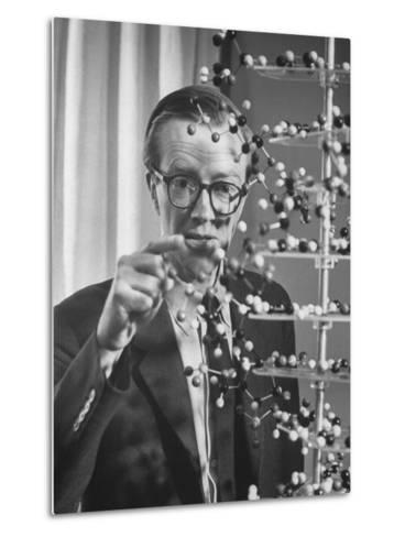 Dr. Maurice H.F. Wilkins Nobel Prize Winner with Model of Dna Molecule for Which He Received Prize--Metal Print