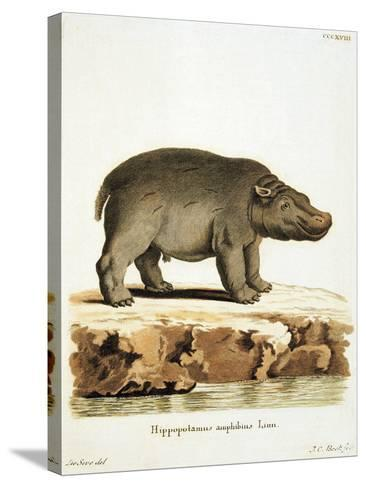 Color Lithographs with African Animals--Stretched Canvas Print