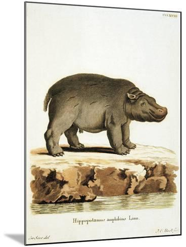 Color Lithographs with African Animals--Mounted Giclee Print