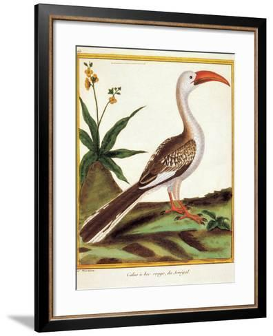 Color Lithographs with African Animals--Framed Art Print