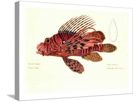 Color Lithographs with Fishes--Stretched Canvas Print