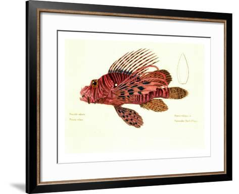 Color Lithographs with Fishes--Framed Art Print