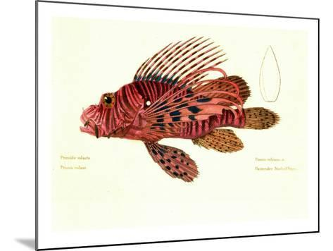 Color Lithographs with Fishes--Mounted Giclee Print
