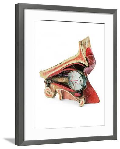 Model of Eye--Framed Art Print