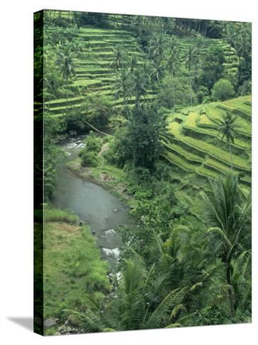 Terraced Rice Paddies (Oryza Sativa), Java, Indonesia-Tim Hauf-Stretched Canvas Print
