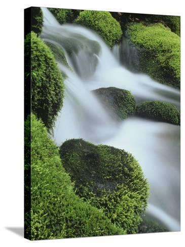 Small Mountain Stream and Moss-Covered Rocks, Great Smoky Mountains National Park, Tennessee, USA-Adam Jones-Stretched Canvas Print