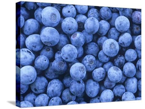 Blueberries, Vaccinium Corymbosum-David Sieren-Stretched Canvas Print