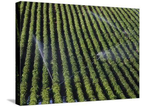 Aerial View of Irrigated Potato Furrows, Eastern Idaho, USA-Marli Miller-Stretched Canvas Print