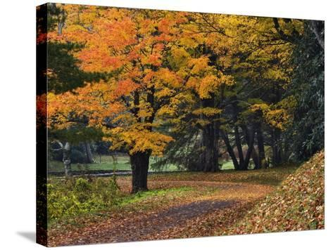 Walking Trail around Bass Lake in the Autumn, Blowing Rock, North Carolina, USA-Adam Jones-Stretched Canvas Print