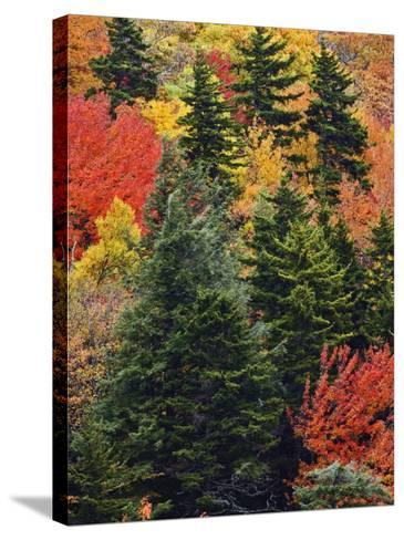 Fall Colors in the Southern Appalachian Mountains, North Carolina, USA-Adam Jones-Stretched Canvas Print