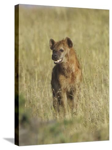 Spotted Hyena on the Savanna, Crocuta Crocuta, Masai Mara, Kenya, Africa-Adam Jones-Stretched Canvas Print