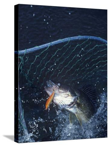 Netting Walleye-Wally Eberhart-Stretched Canvas Print