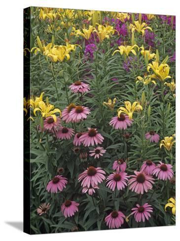 Purple Coneflowers, Echinacea Purpurea, and Daylilies, Hemerocallis, in a Garden-Adam Jones-Stretched Canvas Print
