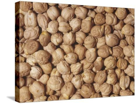 Garbanzo Beans or Chick Peas (Cicer Arietinum). Native to the Middle East-Ken Lucas-Stretched Canvas Print