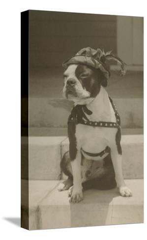 Boston Bulldog in Renaissance Cap--Stretched Canvas Print
