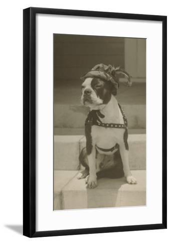 Boston Bulldog in Renaissance Cap--Framed Art Print