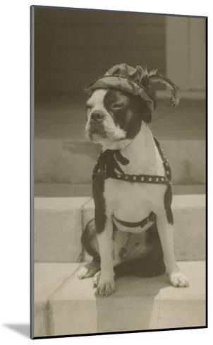 Boston Bulldog in Renaissance Cap--Mounted Art Print