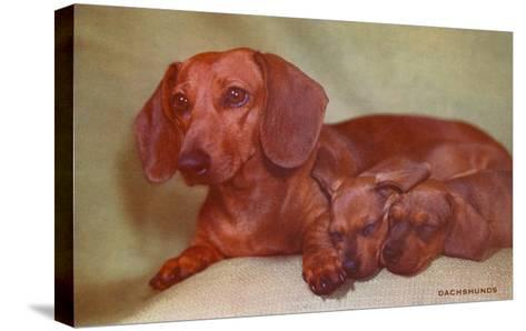 Mother Dachshund and Two Pups--Stretched Canvas Print