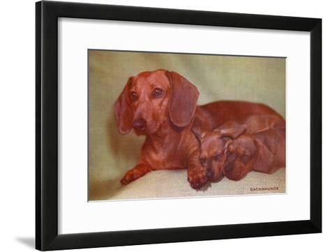 Mother Dachshund and Two Pups--Framed Art Print