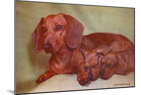 Mother Dachshund and Two Pups--Mounted Art Print