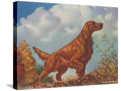 Irish Setter Pointing--Stretched Canvas Print