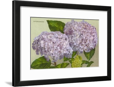 Hydrangea--Framed Art Print