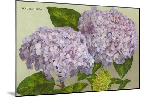 Hydrangea--Mounted Art Print