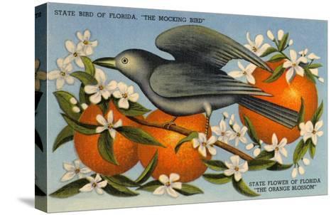 Mockingbird, Orange Blossoms, Florida--Stretched Canvas Print