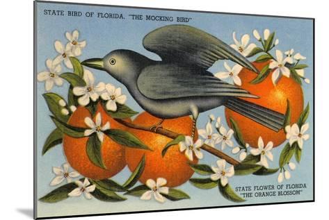 Mockingbird, Orange Blossoms, Florida--Mounted Art Print