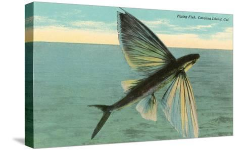 Flying Fish, Catalina, California--Stretched Canvas Print