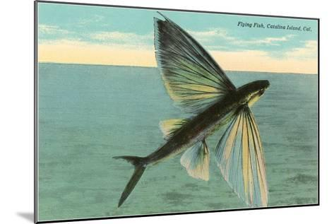 Flying Fish, Catalina, California--Mounted Art Print