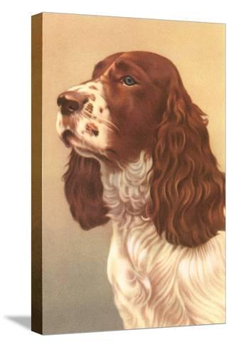 Springer Spaniel--Stretched Canvas Print