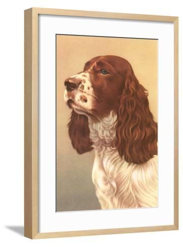 Springer Spaniel--Framed Art Print