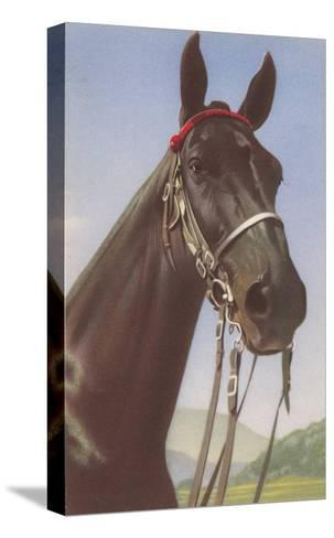 Black Horse--Stretched Canvas Print