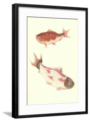Koi--Framed Art Print