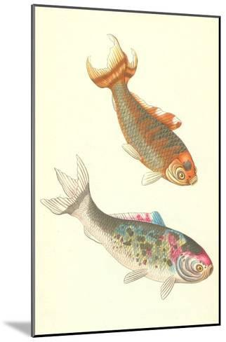 Koi--Mounted Art Print