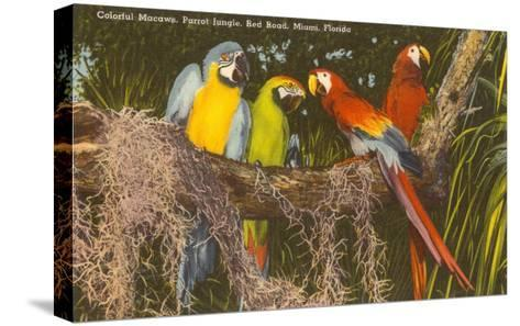 Macaws, Miami, Florida--Stretched Canvas Print
